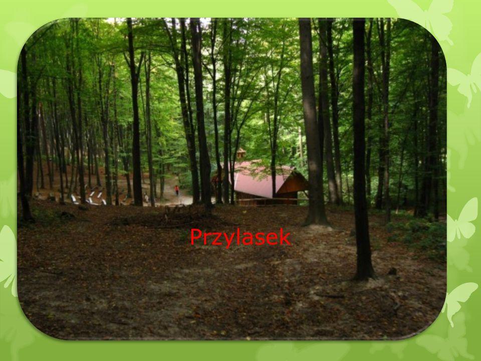  Na południowym krańcu Hermanowej, na rozległym wzniesieniu o wysokości 384 m n.p.m., rozlokowały się domy przysiółka Przylasek.