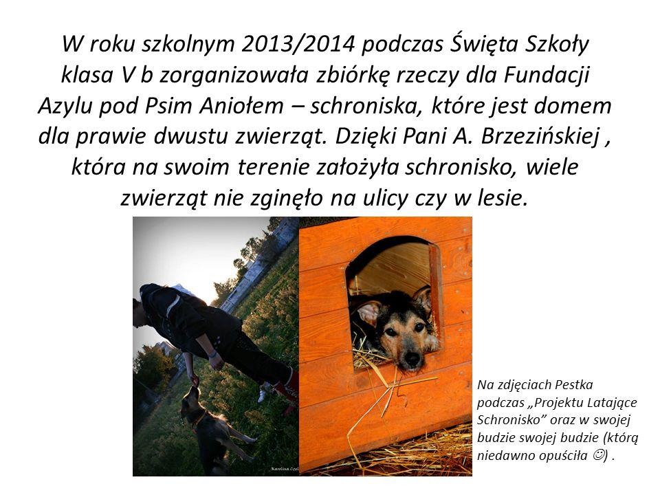 W roku szkolnym 2013/2014 podczas Święta Szkoły klasa V b zorganizowała zbiórkę rzeczy dla Fundacji Azylu pod Psim Aniołem – schroniska, które jest domem dla prawie dwustu zwierząt.