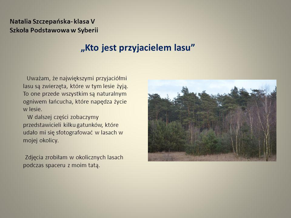 """Natalia Szczepańska- klasa V Szkoła Podstawowa w Syberii """"Kto jest przyjacielem lasu Uważam, że największymi przyjaciółmi lasu są zwierzęta, które w tym lesie żyją."""