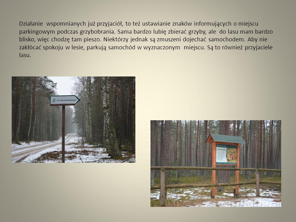 Kolejnymi przyjaciółmi lasu są według mnie ludzie, którzy ten las samodzielnie sadzą i go pielęgnują.