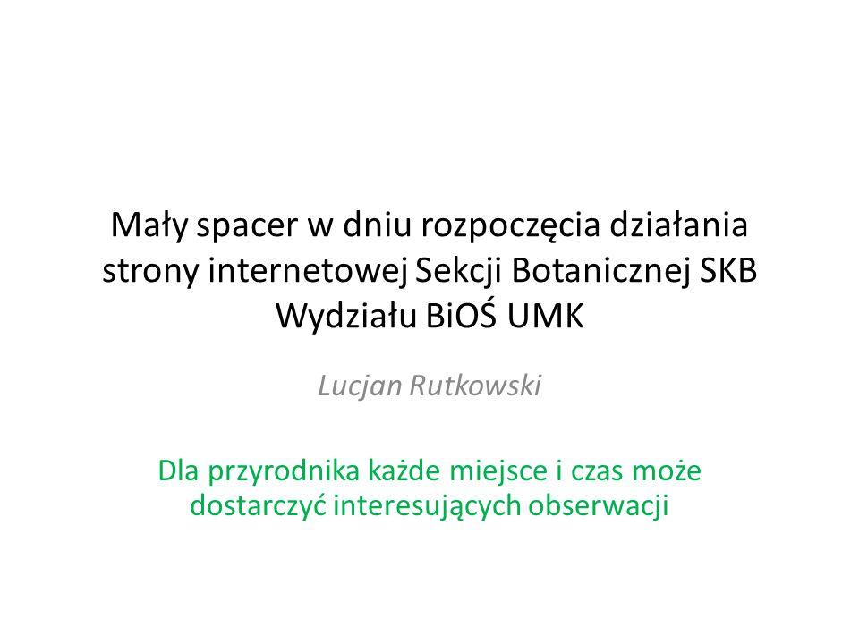 Mały spacer w dniu rozpoczęcia działania strony internetowej Sekcji Botanicznej SKB Wydziału BiOŚ UMK Lucjan Rutkowski Dla przyrodnika każde miejsce i czas może dostarczyć interesujących obserwacji