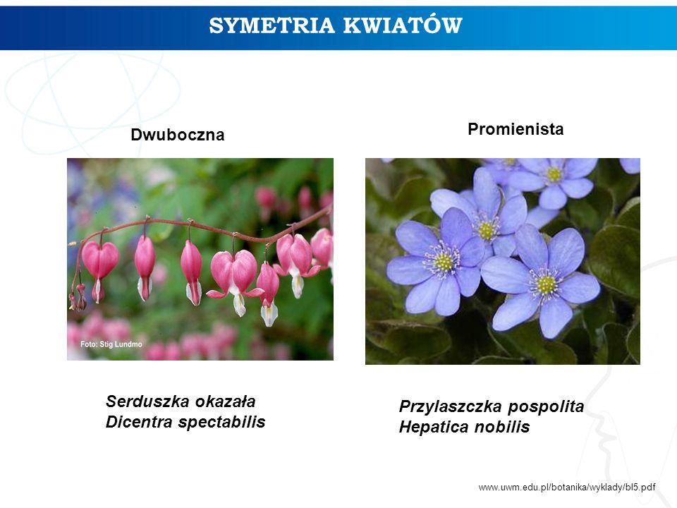 SYMETRIA KWIATÓW Serduszka okazała Dicentra spectabilis Przylaszczka pospolita Hepatica nobilis Dwuboczna Promienista www.uwm.edu.pl/botanika/wyklady/