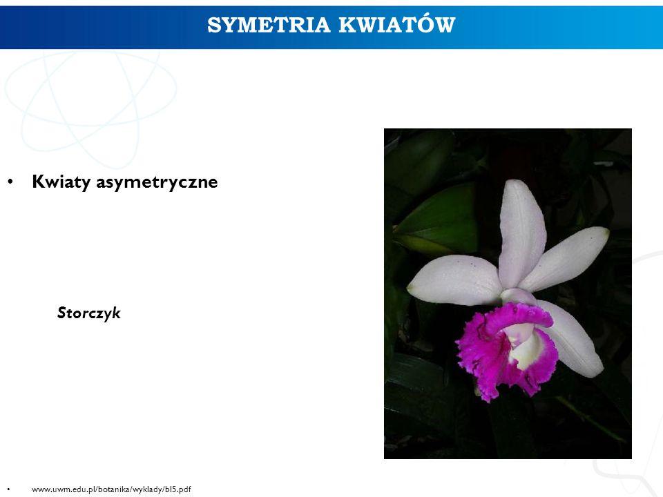 SYMETRIA KWIATÓW Kwiaty asymetryczne Storczyk www.uwm.edu.pl/botanika/wyklady/bl5.pdf 