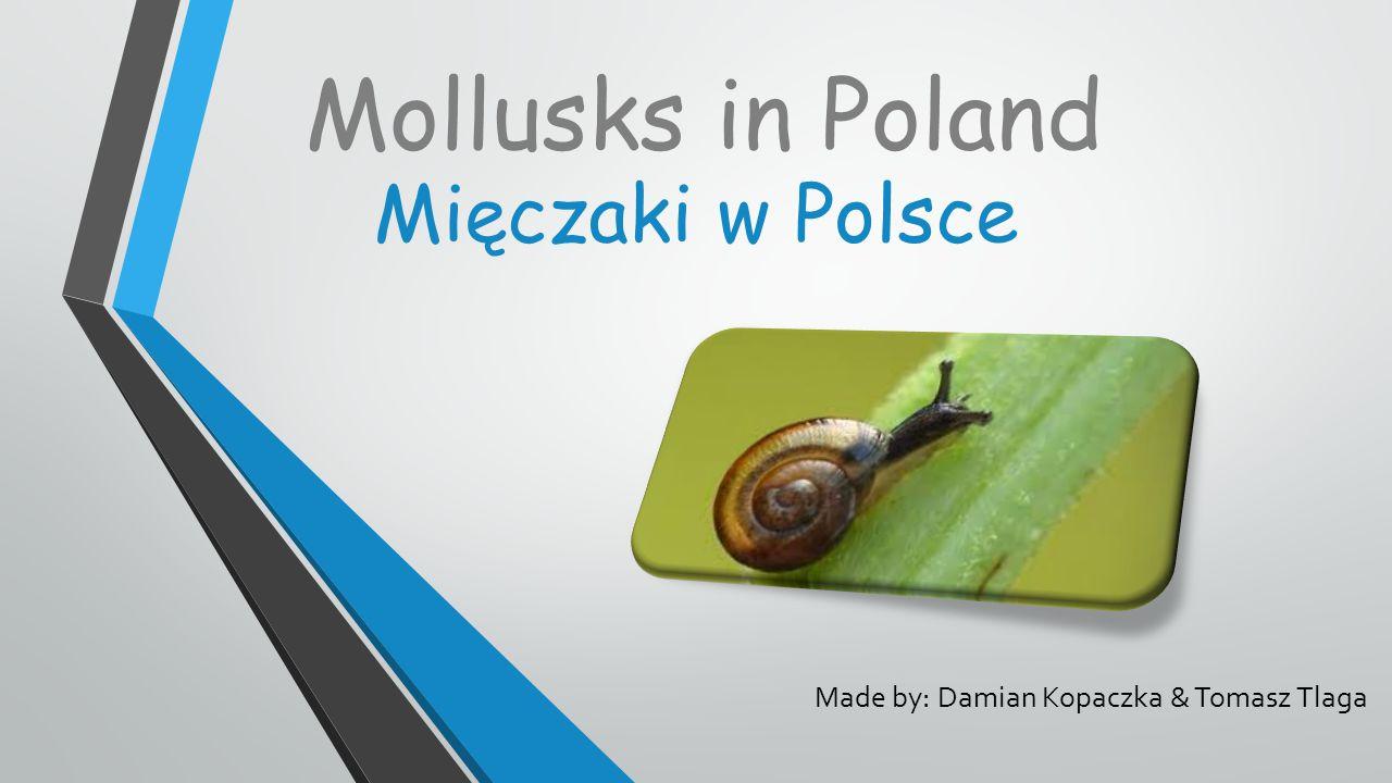 Mięczaki w Polsce Made by: Damian Kopaczka & Tomasz Tlaga Mollusks in Poland