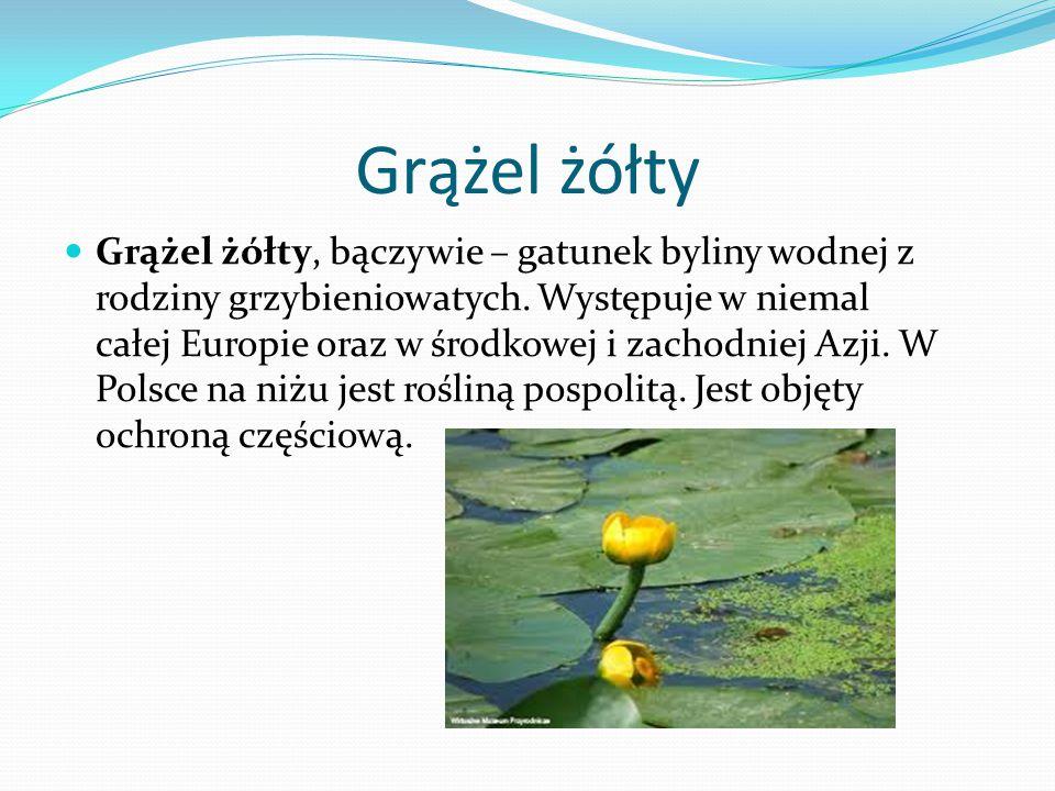 Rzęsa wodna Rzęsa – rodzaj drobnych roślin wodnych z rodziny obrazkowatych, liczący 13 gatunków występujących niemal na całym świecie, z czego 5 w Polsce.