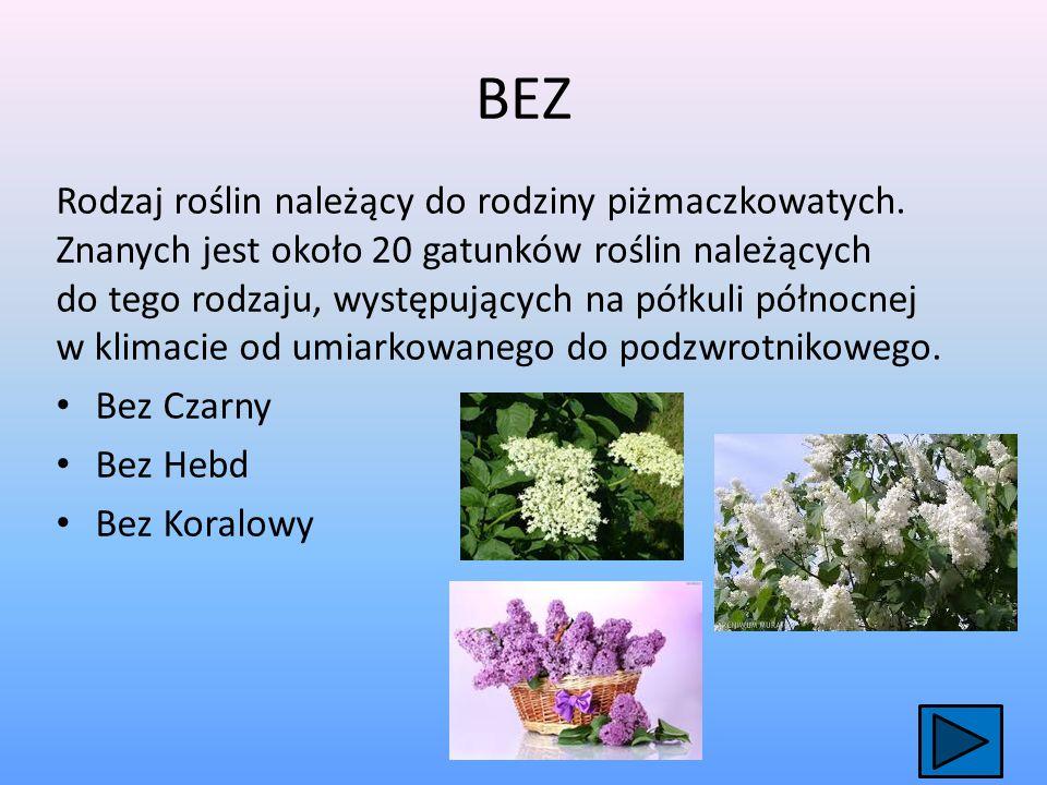 RÓŻA Rodzaj krzewów należących do rodziny różowatych Znanych jest 150–200 gatunków występujących na półkuli północnej, czasem podaje się nawet dwukrotnie większą liczbę, co wynika z różnego traktowania taksonów.