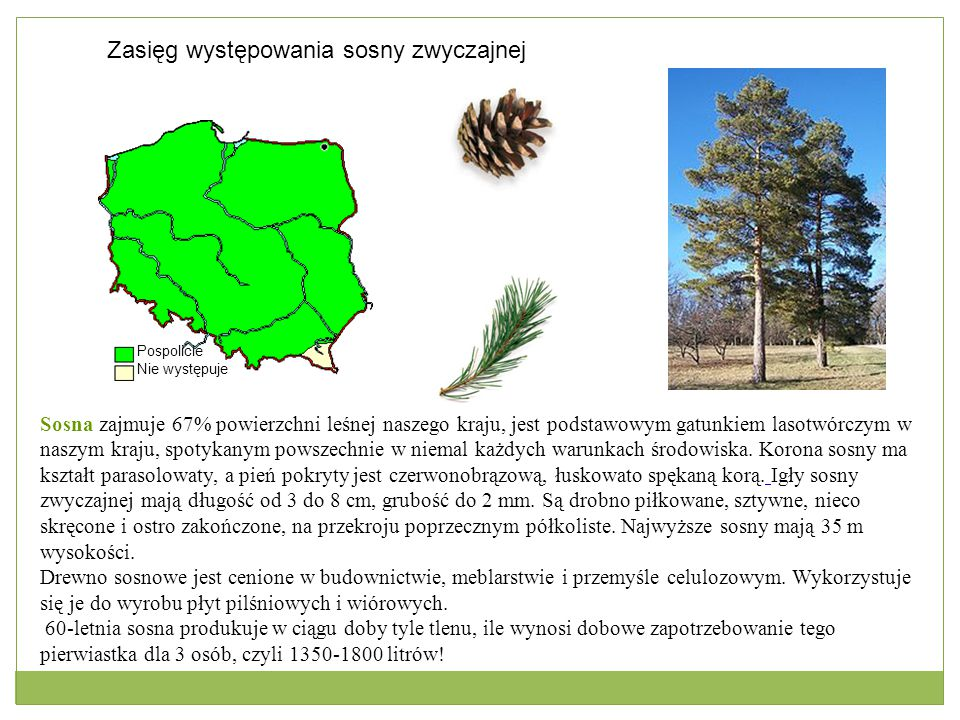 Pospolicie Nie występuje Zasięg występowania sosny zwyczajnej Sosna zajmuje 67% powierzchni leśnej naszego kraju, jest podstawowym gatunkiem lasotwórc