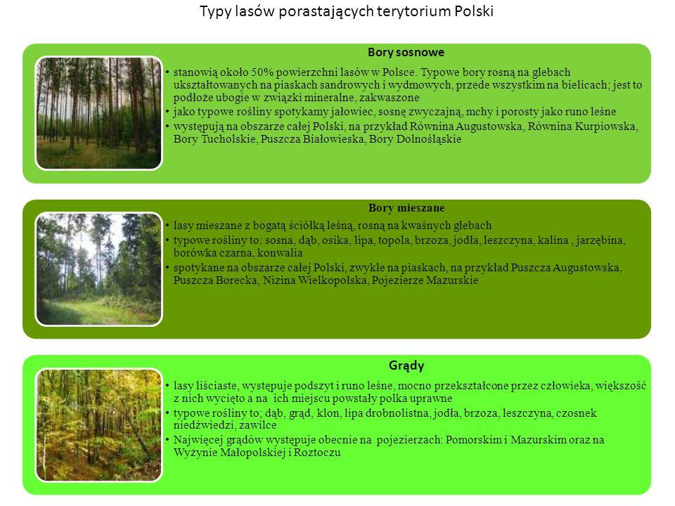 Typy lasów porastających terytorium Polski Bory sosnowe stanowią około 50% powierzchni lasów w Polsce. Typowe bory rosną na glebach ukształtowanych na
