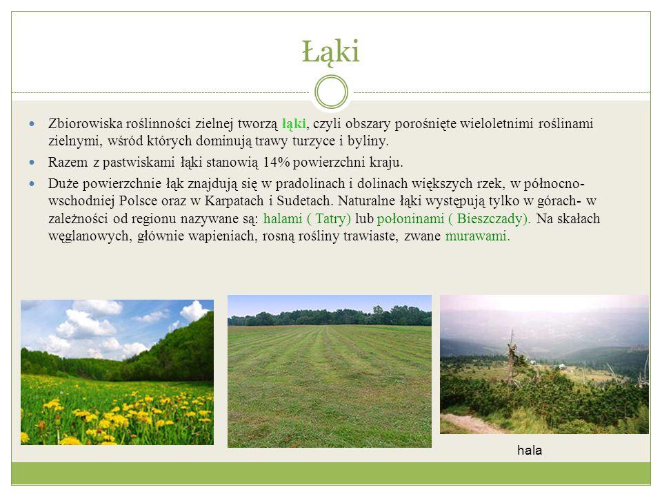 Łąki Zbiorowiska roślinności zielnej tworzą łąki, czyli obszary porośnięte wieloletnimi roślinami zielnymi, wśród których dominują trawy turzyce i byl
