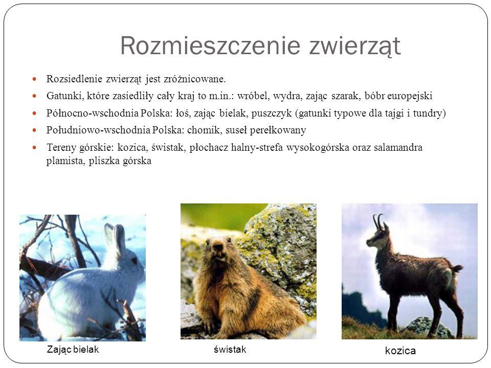 Rozmieszczenie zwierząt Rozsiedlenie zwierząt jest zróżnicowane. Gatunki, które zasiedliły cały kraj to m.in.: wróbel, wydra, zając szarak, bóbr europ