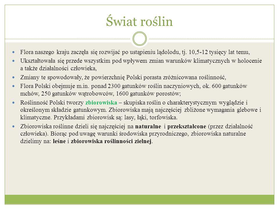 Zróżnicowanie leśne w Polsce związana z klimatem Szata roślinna Polski jest typowa dla strefy klimatów umiarkowanych Spore zróżnicowanie klimatyczne Polski spowodowało też znaczne zróżnicowanie szaty roślinnej.