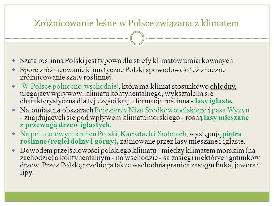 Zróżnicowanie leśne w Polsce związana z klimatem Szata roślinna Polski jest typowa dla strefy klimatów umiarkowanych Spore zróżnicowanie klimatyczne P
