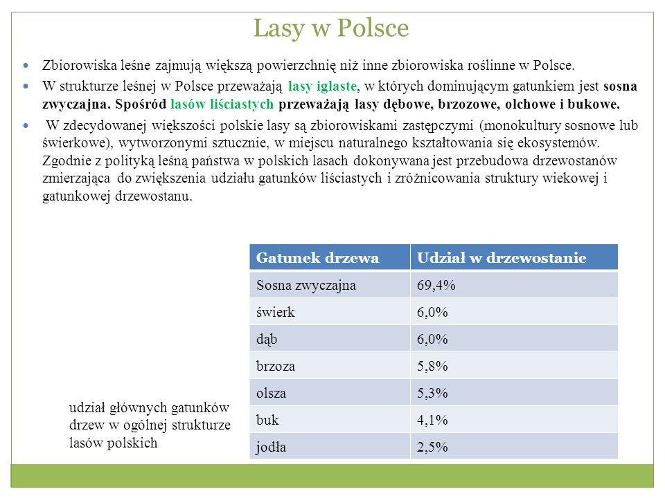 Lasy w Polsce Zbiorowiska leśne zajmują większą powierzchnię niż inne zbiorowiska roślinne w Polsce. W strukturze leśnej w Polsce przeważają lasy igla