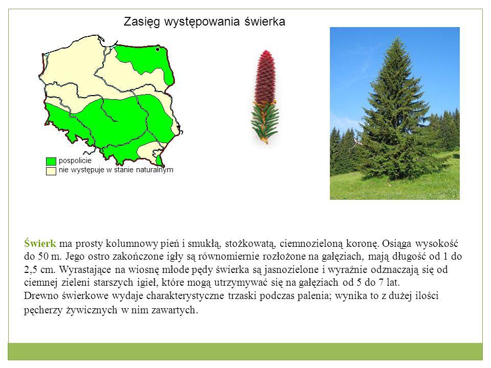 Pospolicie Nie występuje Zasięg występowania sosny zwyczajnej Sosna zajmuje 67% powierzchni leśnej naszego kraju, jest podstawowym gatunkiem lasotwórczym w naszym kraju, spotykanym powszechnie w niemal każdych warunkach środowiska.
