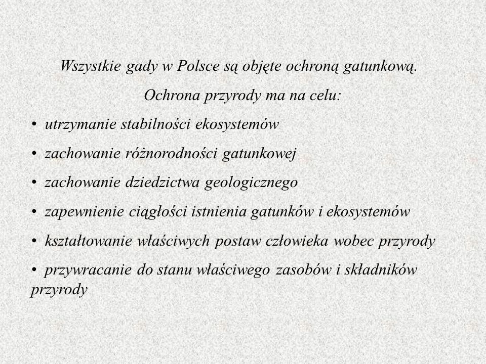 Wszystkie gady w Polsce są objęte ochroną gatunkową.