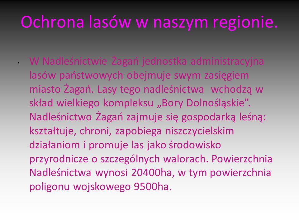 Ochrona lasów w naszym regionie. W Nadleśnictwie Żagań jednostka administracyjna lasów państwowych obejmuje swym zasięgiem miasto Żagań. Lasy tego nad