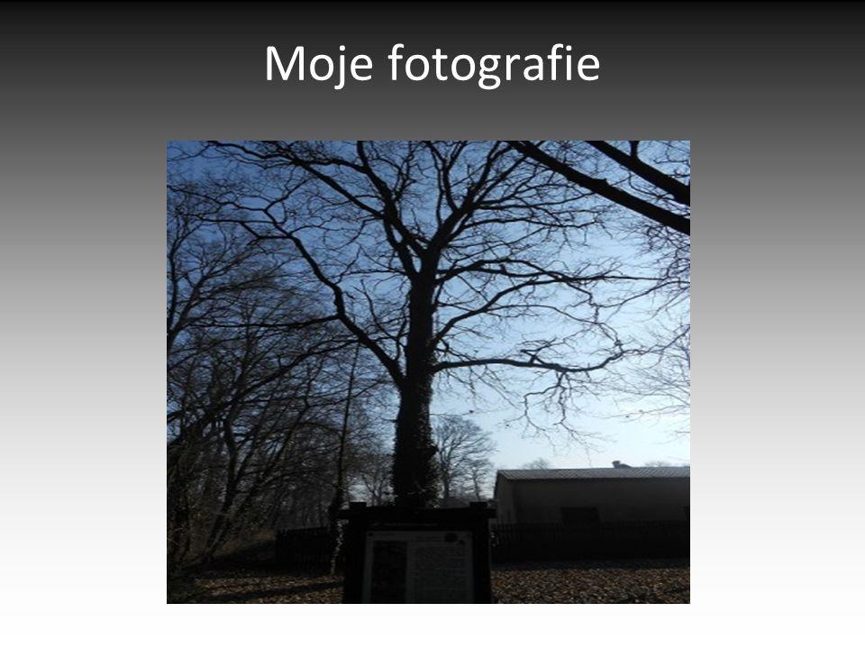 Moje fotografie