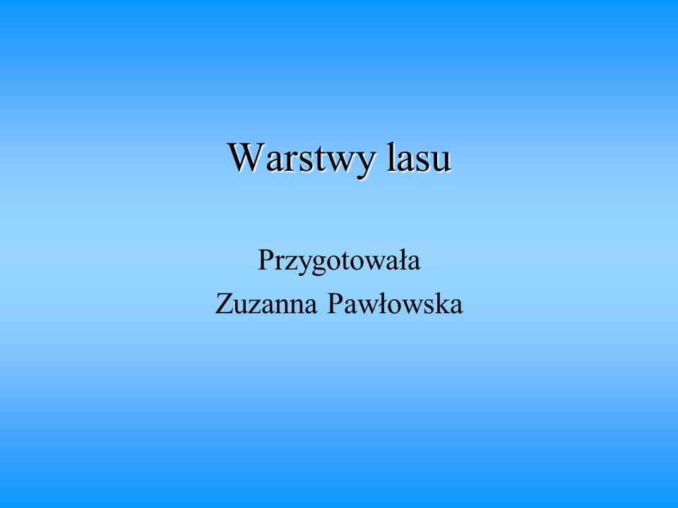 Warstwy lasu Przygotowała Zuzanna Pawłowska