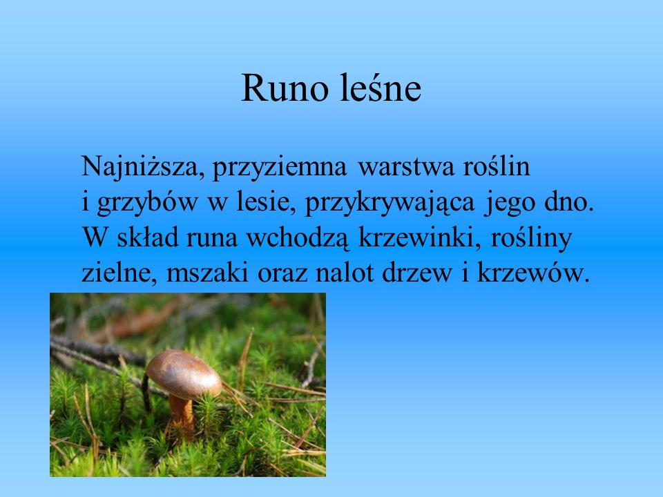 Runo leśne Najniższa, przyziemna warstwa roślin i grzybów w lesie, przykrywająca jego dno. W skład runa wchodzą krzewinki, rośliny zielne, mszaki oraz
