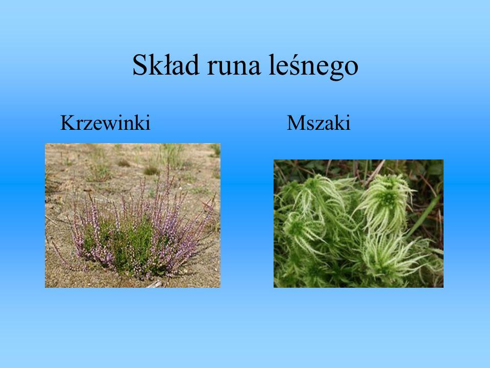 Podsumowanie: Warstwy lasu składają się z: -ściółki, -runa leśnego, -podszytu, -koron drzew.