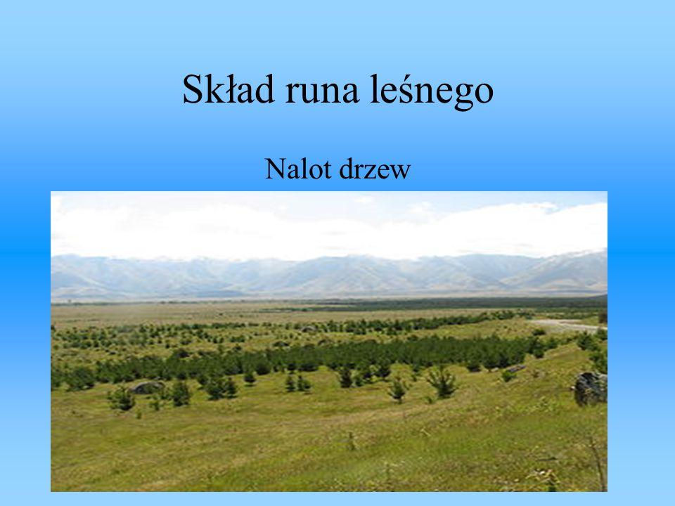 Skład runa leśnego Nalot drzew