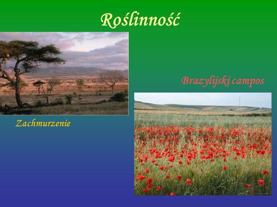 Roślinność Zachmurzenie Brazylijski campos