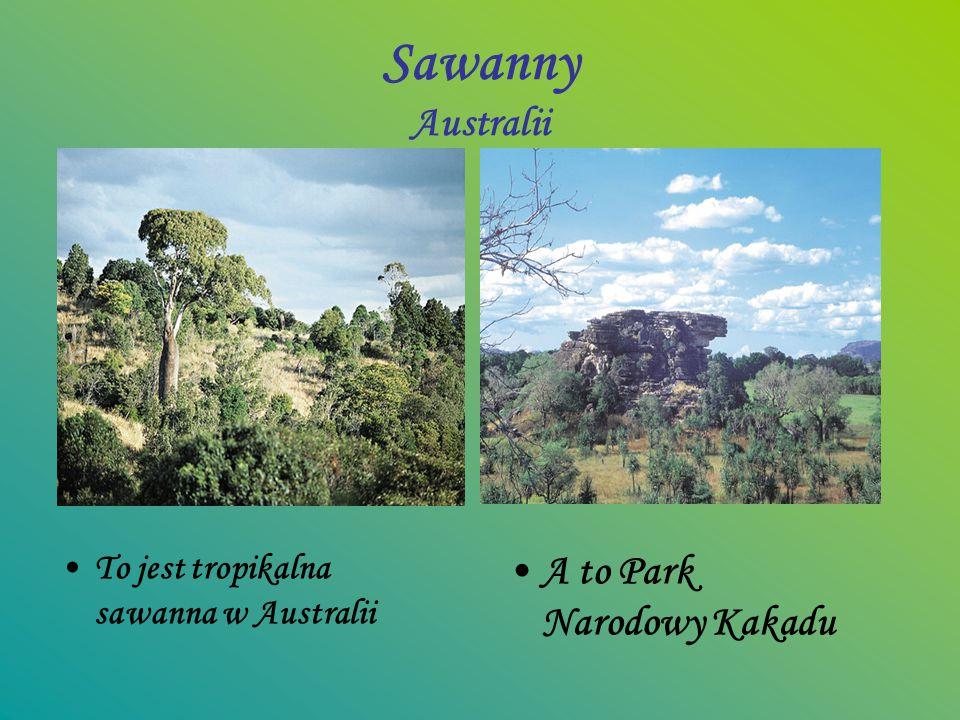 Sawanny Australii To jest tropikalna sawanna w Australii A to Park Narodowy Kakadu