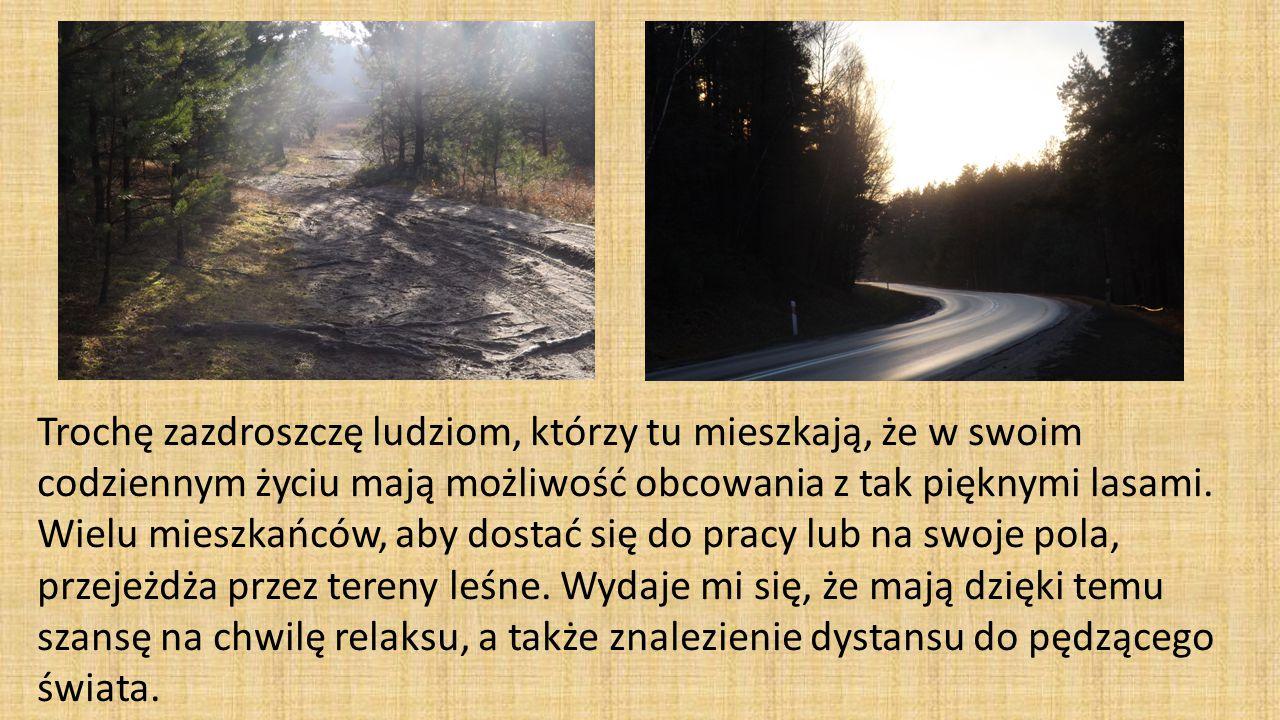 Trochę zazdroszczę ludziom, którzy tu mieszkają, że w swoim codziennym życiu mają możliwość obcowania z tak pięknymi lasami.