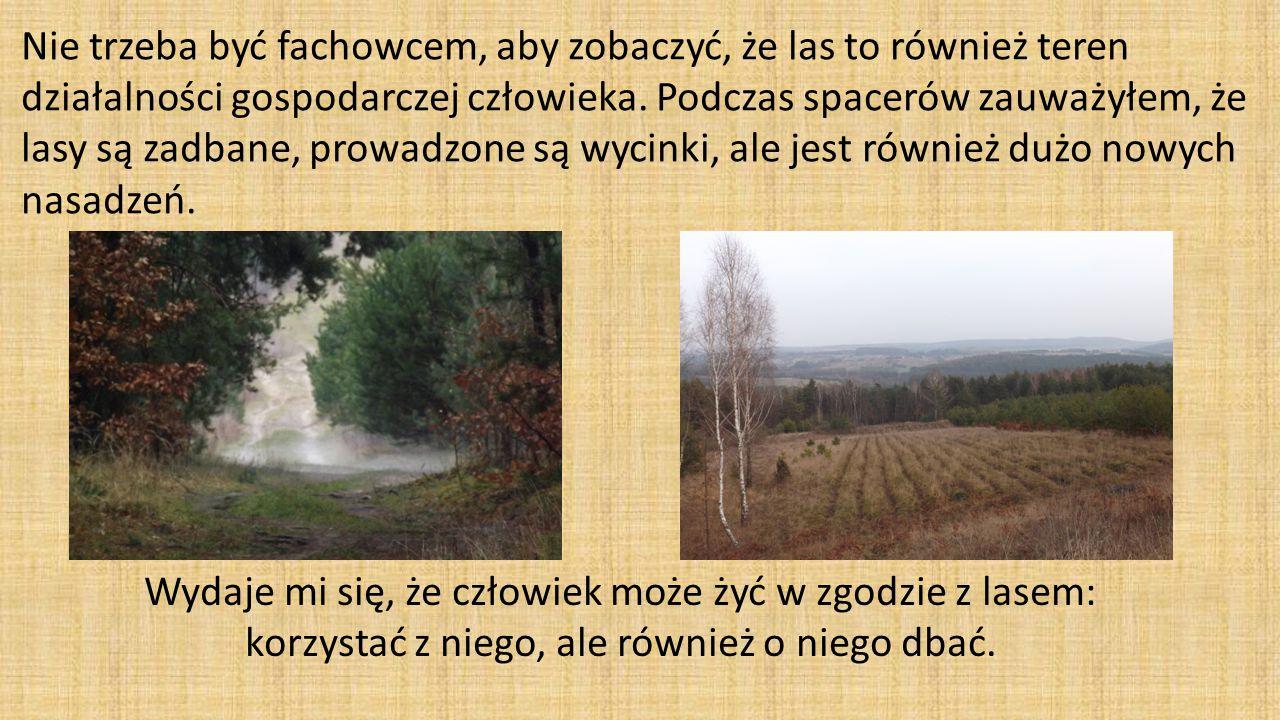 Nie trzeba być fachowcem, aby zobaczyć, że las to również teren działalności gospodarczej człowieka.