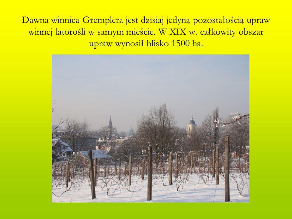 Dawna winnica Gremplera jest dzisiaj jedyną pozostałością upraw winnej latorośli w samym mieście.