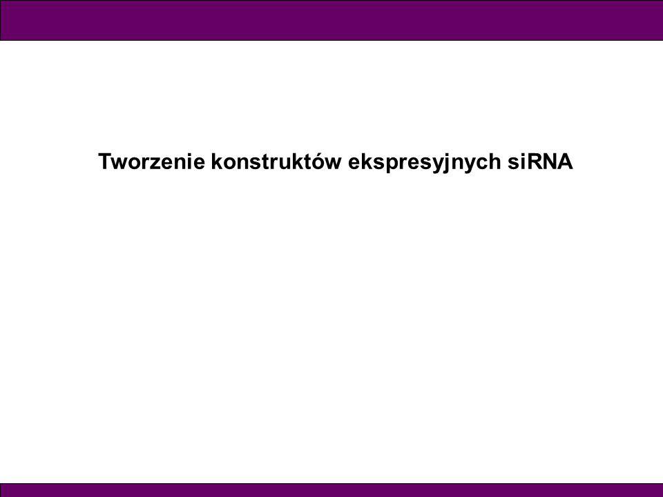 Tworzenie konstruktów ekspresyjnych siRNA