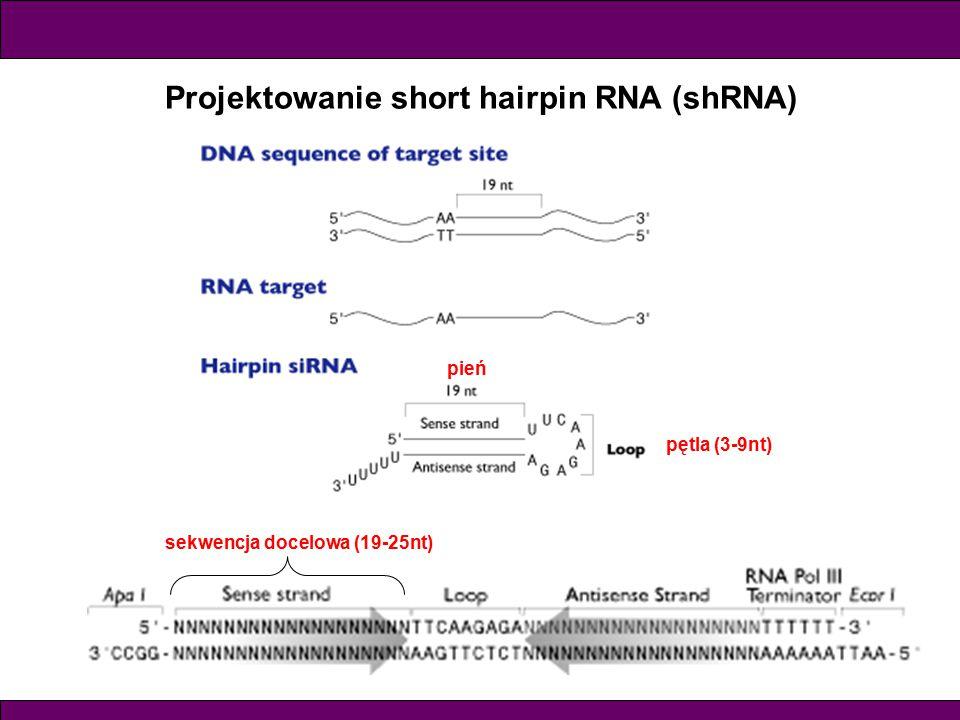 Projektowanie short hairpin RNA (shRNA) sekwencja docelowa (19-25nt) pętla (3-9nt) pień