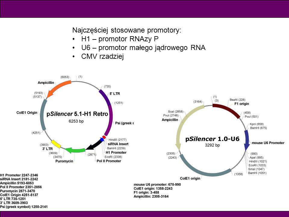 Najczęściej stosowane promotory: H1 – promotor RNAzy P U6 – promotor małego jądrowego RNA CMV rzadziej