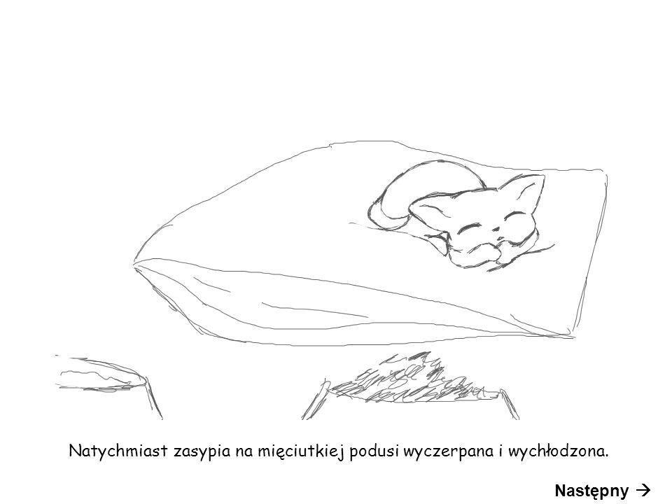 Natychmiast zasypia na mięciutkiej podusi wyczerpana i wychłodzona. Następny 