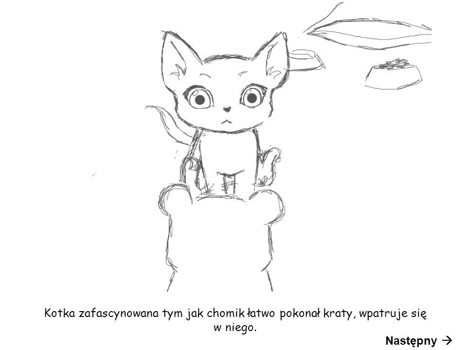 Kotka zafascynowana tym jak chomik łatwo pokonał kraty, wpatruje się w niego. Następny 