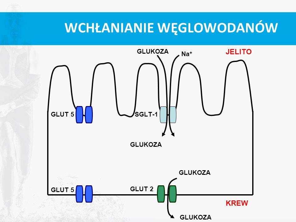 WCHŁANIANIE WĘGLOWODANÓW GLUT 5SGLT-1 GLUT 5 GLUT 2 Na + GLUKOZA KREW JELITO