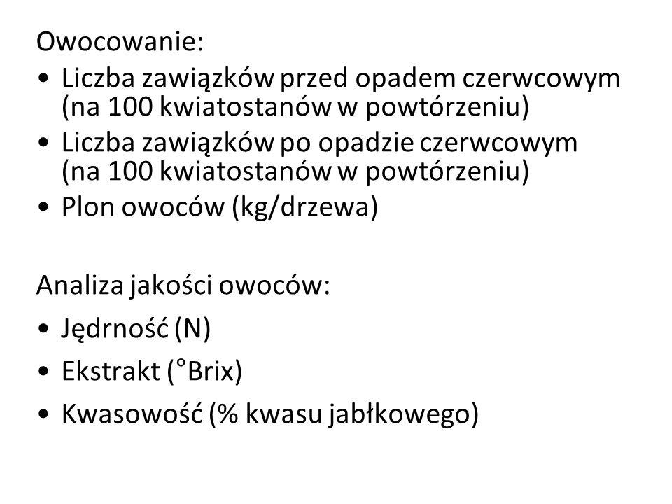 Owocowanie: Liczba zawiązków przed opadem czerwcowym (na 100 kwiatostanów w powtórzeniu) Liczba zawiązków po opadzie czerwcowym (na 100 kwiatostanów w