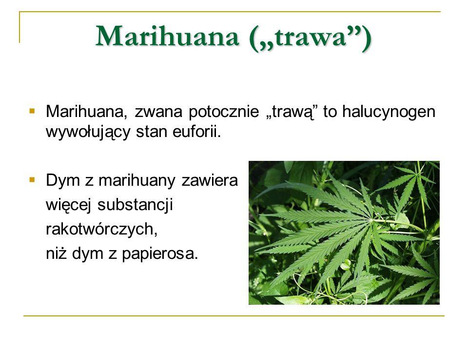 """Marihuana (""""trawa )  Marihuana, zwana potocznie """"trawą to halucynogen wywołujący stan euforii."""