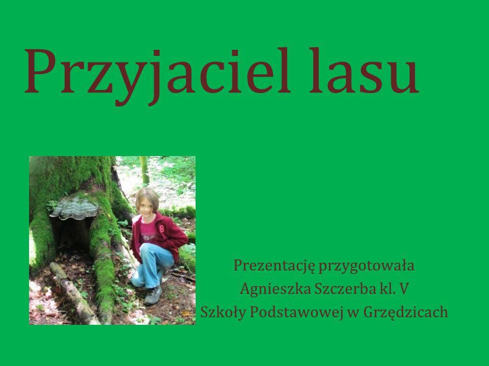 Przyjaciel lasu Prezentację przygotowała Agnieszka Szczerba kl. V Szkoły Podstawowej w Grzędzicach