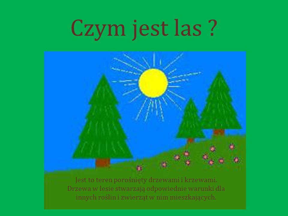 Czym jest las .Jest to teren porośnięty drzewami i krzewami.