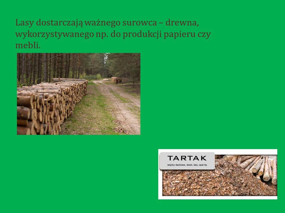 Lasy dostarczają ważnego surowca – drewna, wykorzystywanego np. do produkcji papieru czy mebli.