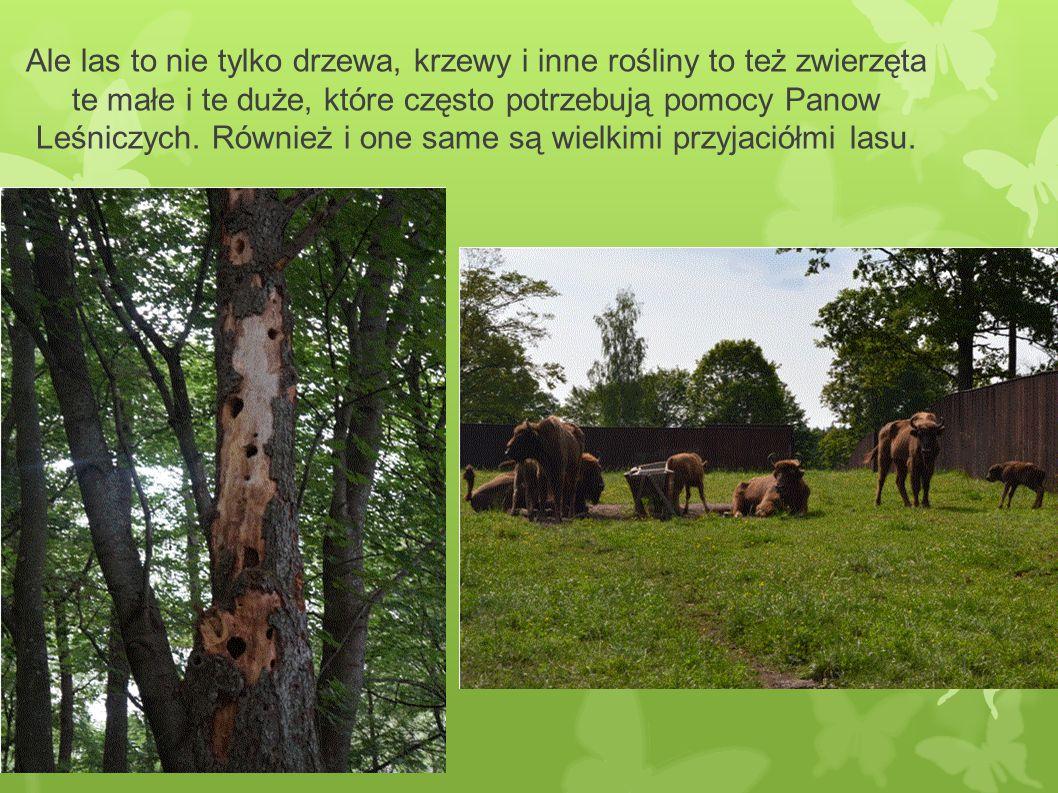 Ale las to nie tylko drzewa, krzewy i inne rośliny to też zwierzęta te małe i te duże, które często potrzebują pomocy Panow Leśniczych.