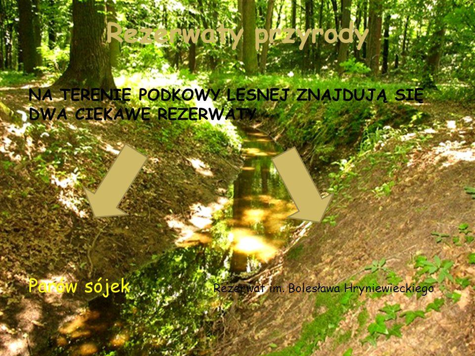Parów sójek Parów Sójek – rezerwat przyrody,znajdujący się na terenie miasta Podkowa leśna Celem ochrony jest zachowanie lasów liściastych o charakterze naturalnym z bogatym runem charakterystycznym dla żyznych siedlisk grądowych.