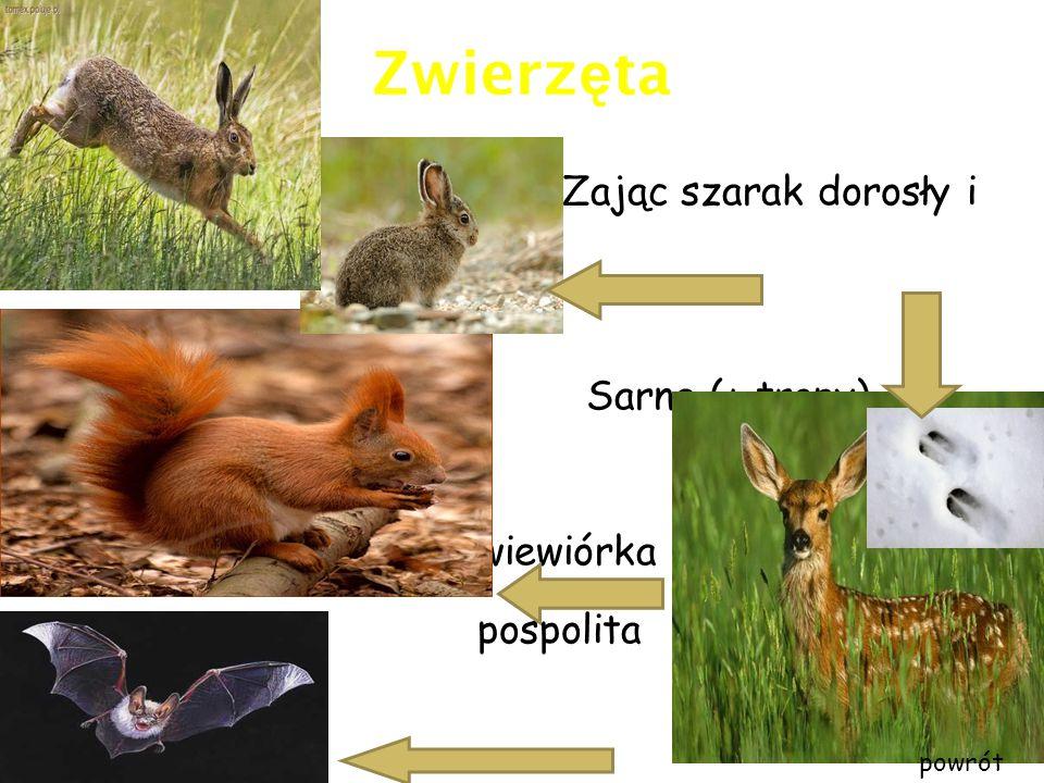 Pomniki przyrody Na terenie Podkowy Leśnej znajdują sie następujące pomniki przyrody: DRZEWA 22 GŁAZY 3 ALEJE 4 Aleje LipoweGłazy CZY