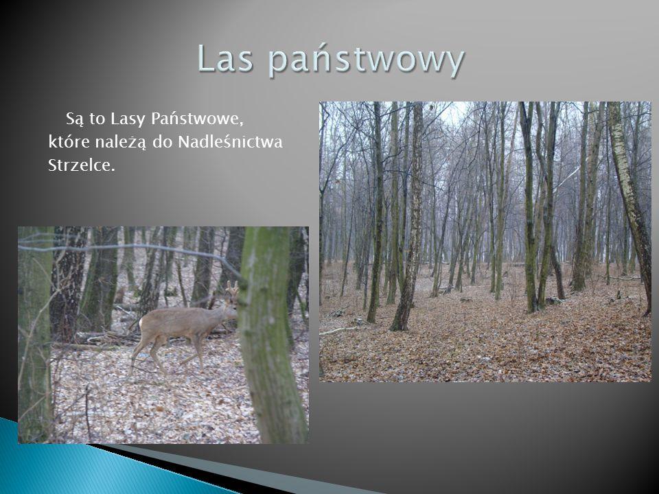 Są to Lasy Państwowe, które należą do Nadleśnictwa Strzelce.