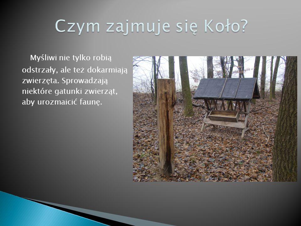 """Zwierzętami opiekuje się Koło Łowieckie """"Basior nr 56, które ma swoją siedzibę w Jarosławcu."""