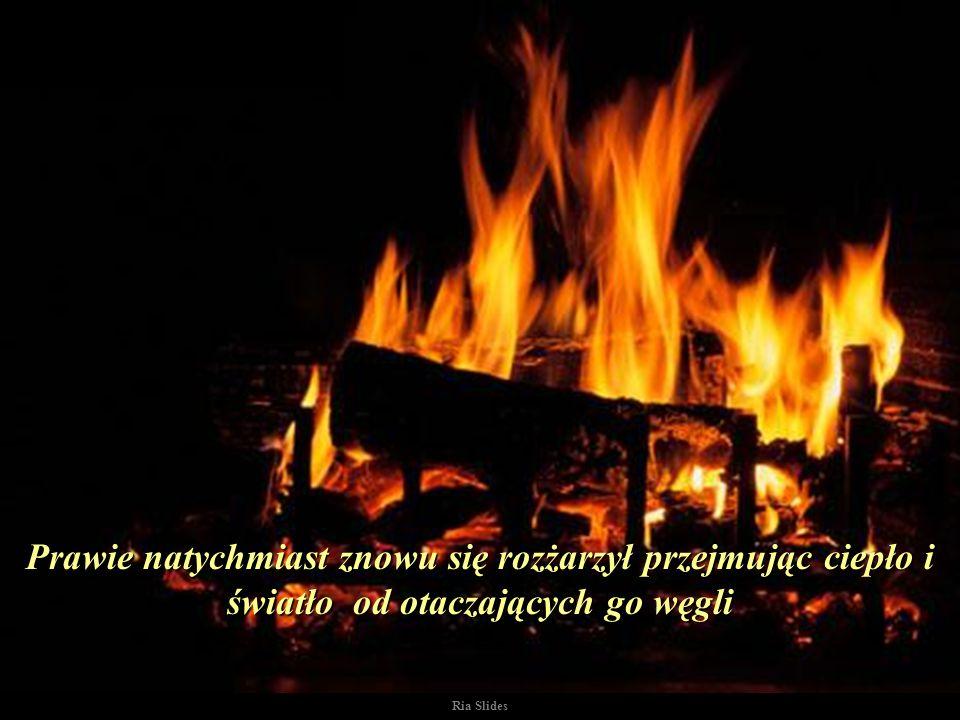 Starszy zanim wyszedł znowu poruszył zimnym i bezużytecznym węgielkiem zbliżając go z powrotem do ognia..