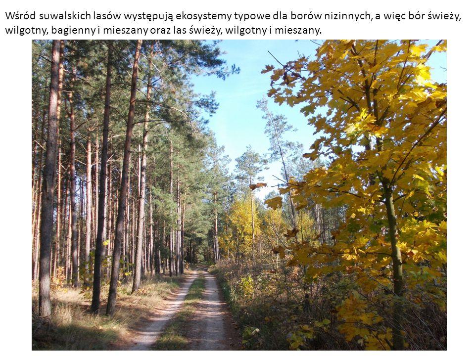 Wśród suwalskich lasów występują ekosystemy typowe dla borów nizinnych, a więc bór świeży, wilgotny, bagienny i mieszany oraz las świeży, wilgotny i mieszany.