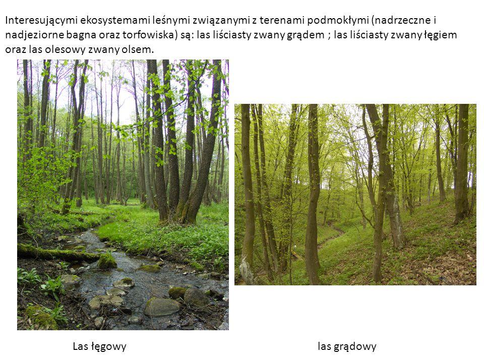 Interesującymi ekosystemami leśnymi związanymi z terenami podmokłymi (nadrzeczne i nadjeziorne bagna oraz torfowiska) są: las liściasty zwany grądem ; las liściasty zwany łęgiem oraz las olesowy zwany olsem.