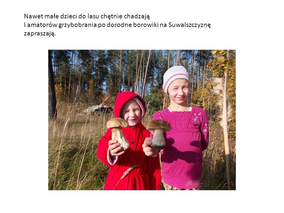 Nawet małe dzieci do lasu chętnie chadzają I amatorów grzybobrania po dorodne borowiki na Suwalszczyznę zapraszają.